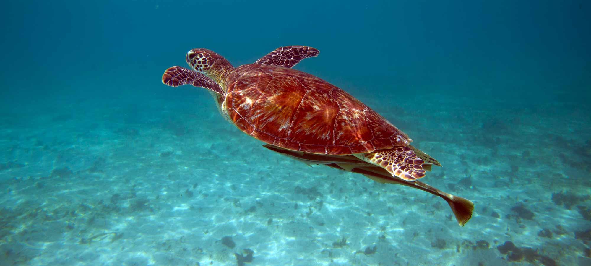 Inselhopping im Indischen Ozean