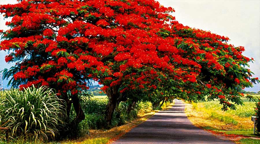 Martinique + Guadeloupe + St. Martin
