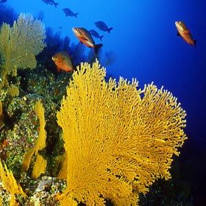Tauchreise rangiroa fakarava tauchen polynesien for Rangiroa urlaub